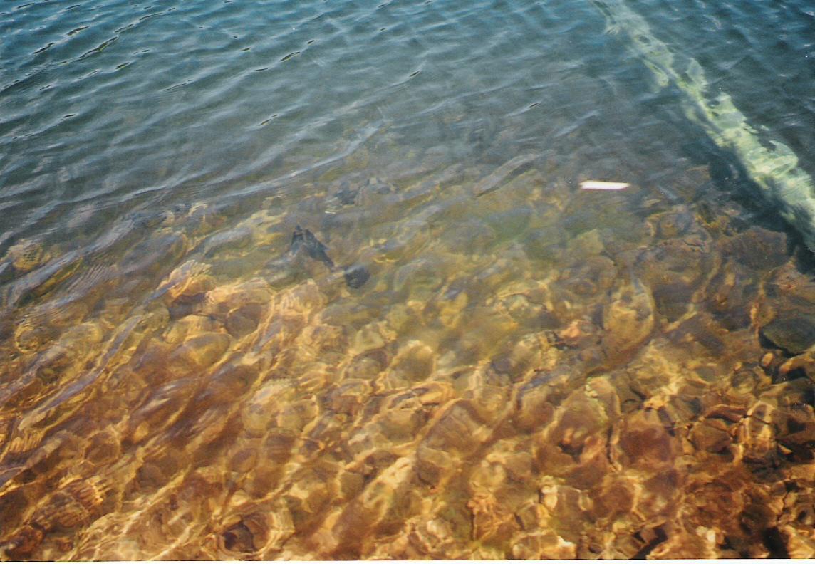 BearCreek_Lake.Gold