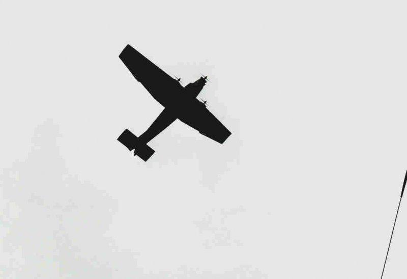 wings.7